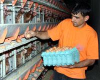 İsrail Türkiye'den yumurta ithalatını durdurdu